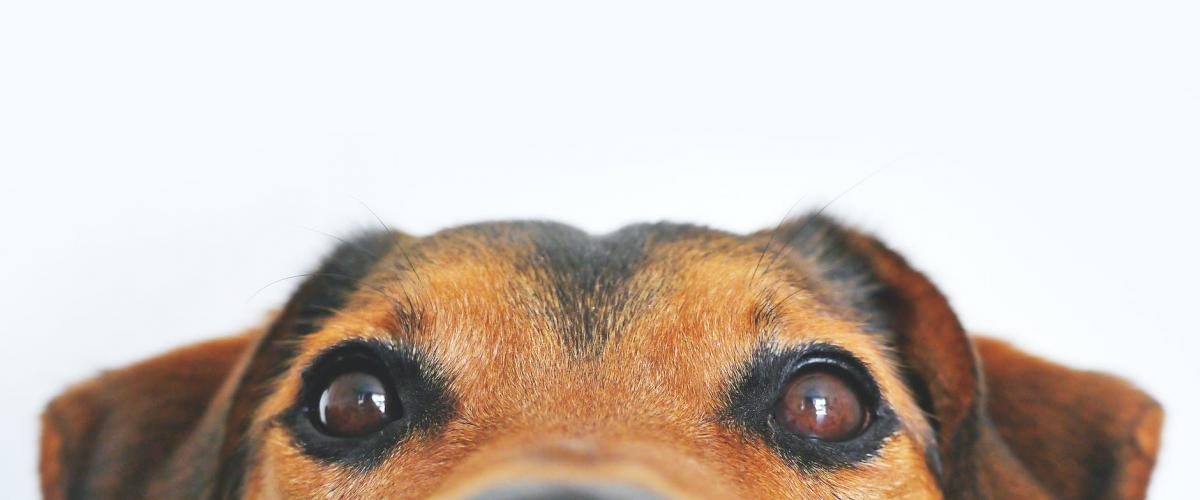 What are best Raw Dog Food Brands